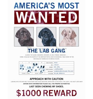 Metalna tabla - America's most Wanted Dogs