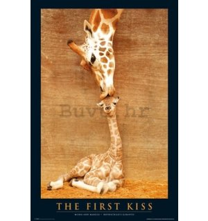 Poster - First Kiss Giraffe (2)